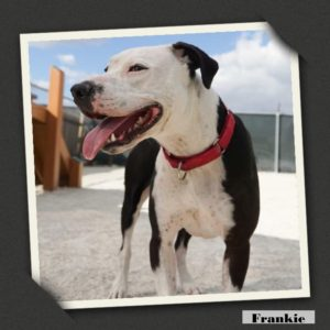 adoptable Frankie1