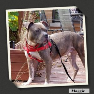 adoptable maggie