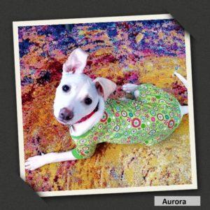 adoptable aurora