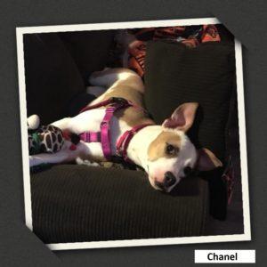 adoptable chanel