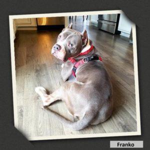 adoptable franko2