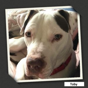 adoptable toby