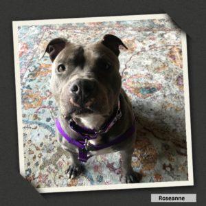 adoptable roseanne