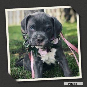 adoptable petunia2