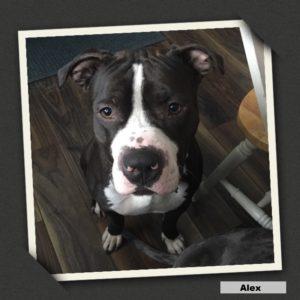 adoptable alex