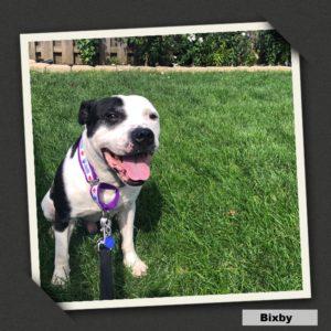 Profile Bixby